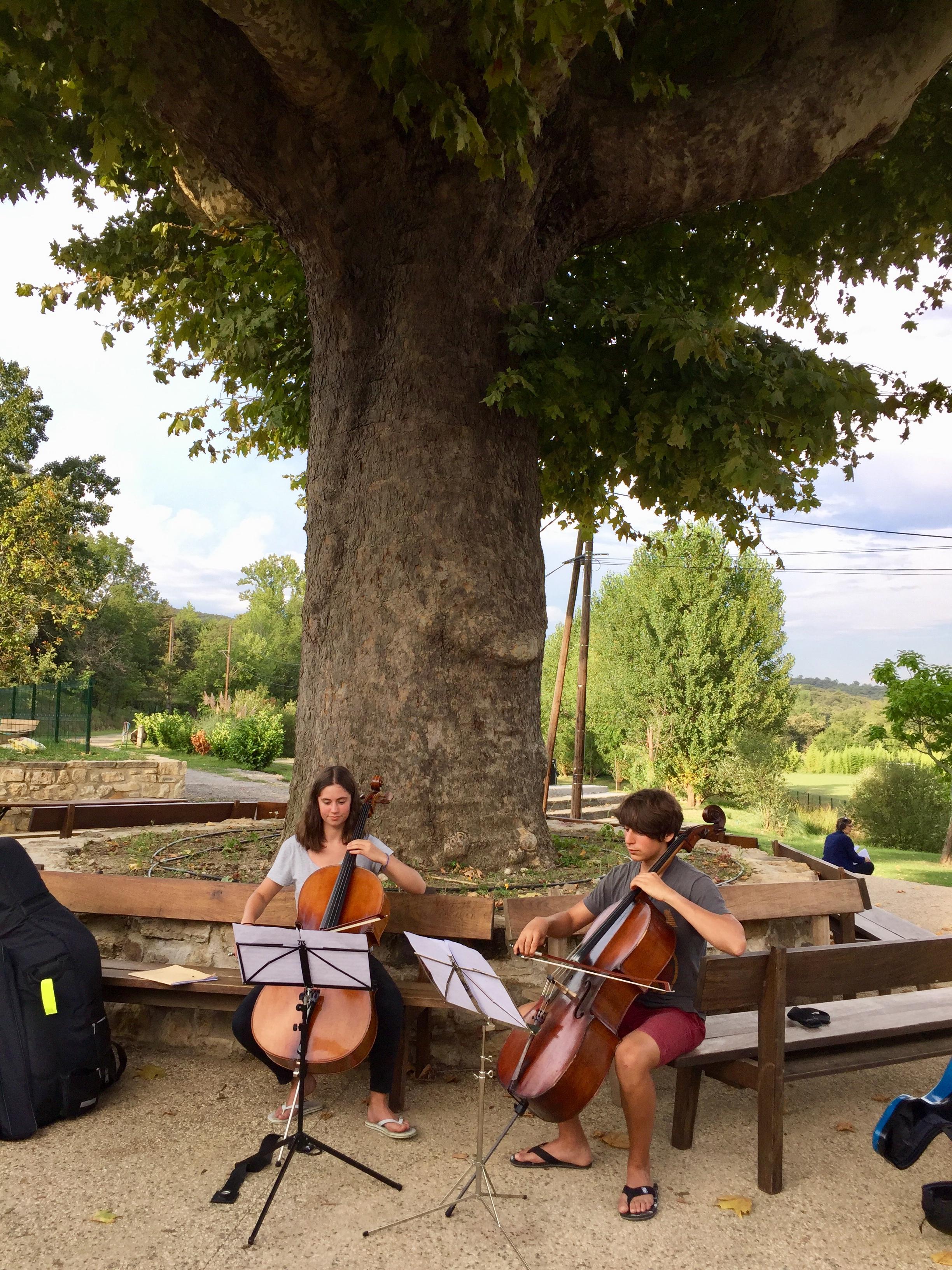 Duo de violoncelles sous le platane